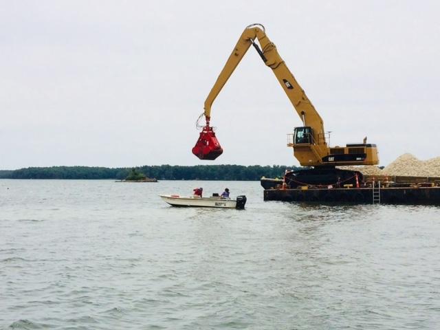 Oyster Restoration CCANH