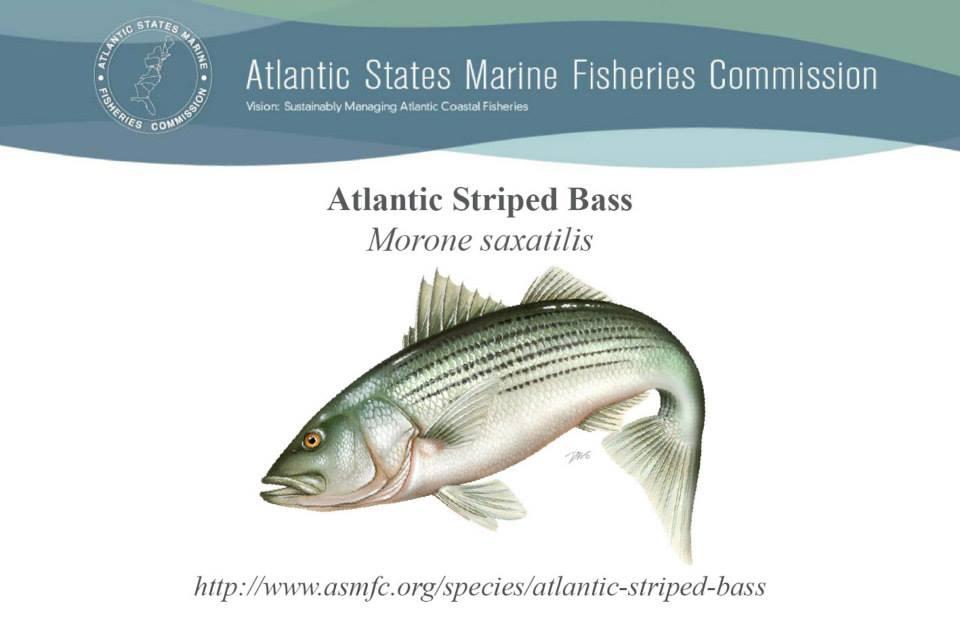 Atlantic States Marine Fisheries, Amendment 7 to the Interstate Fishery Management Plan